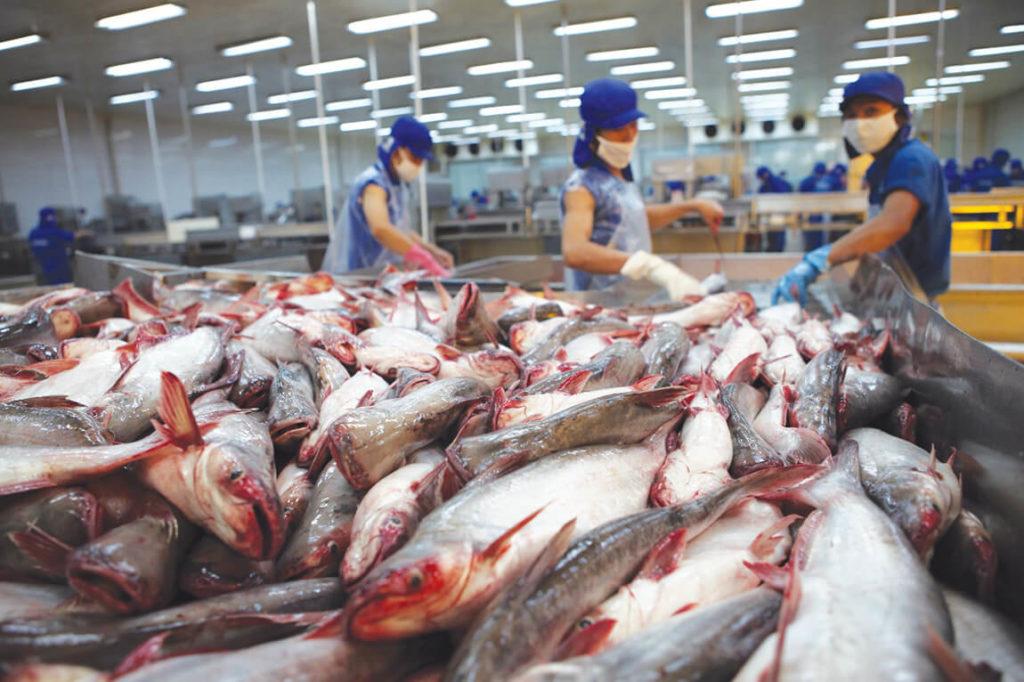 Переработка рыбы